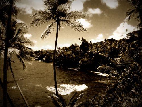 palmandbeach