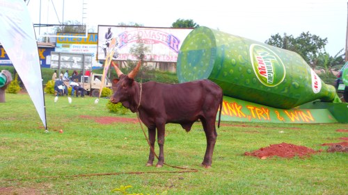 kampala 061